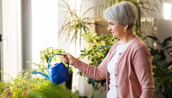 Senior woman watering her plants in her low-maintenance indoor garden space